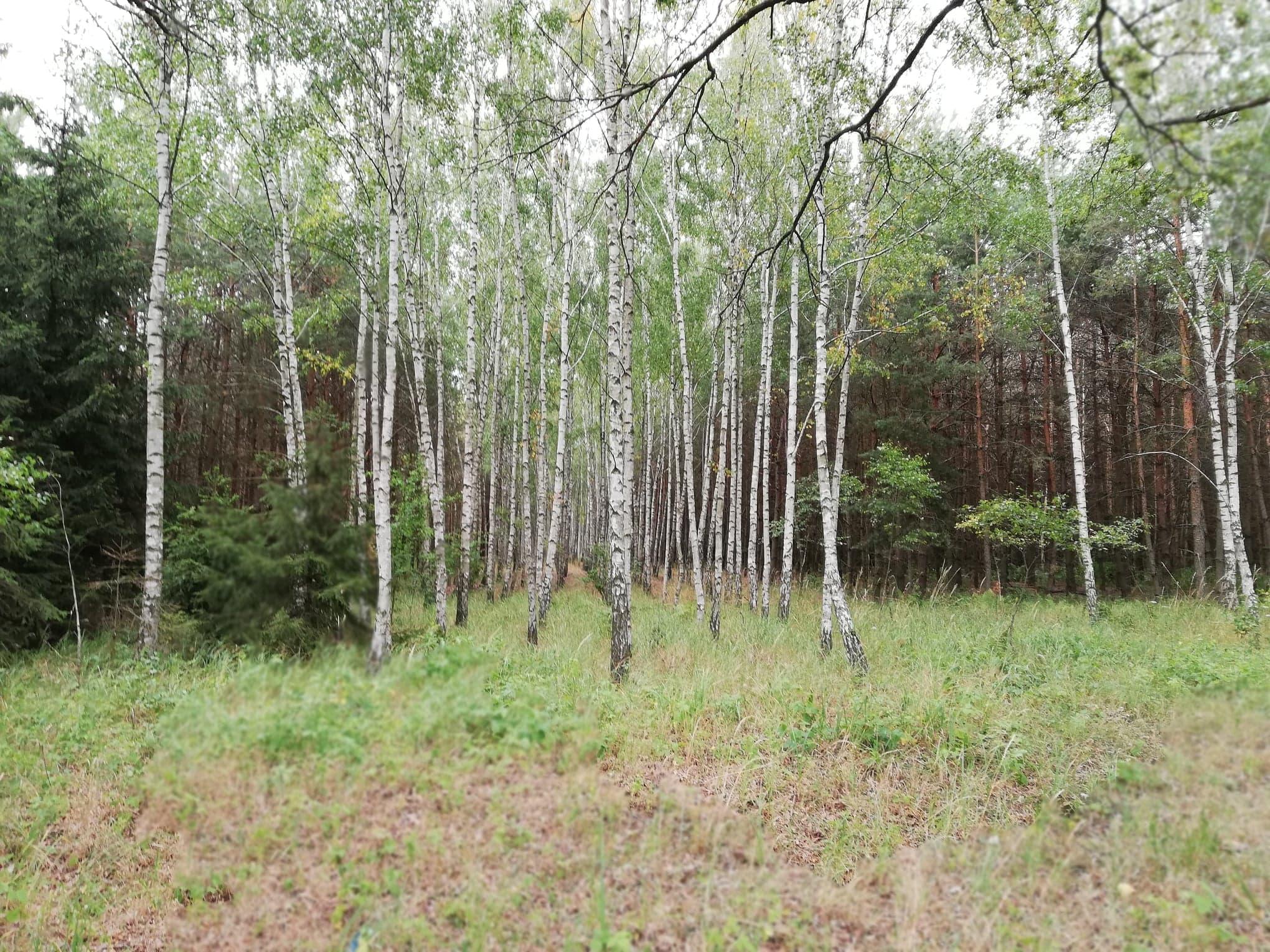 Wśród leśnej przyrody